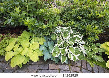 Variety Of Hostas And Shrubs Along Garden Path