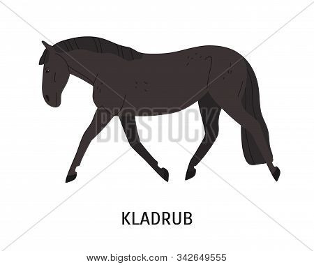 Kladruber Breed Horse Flat Vector Illustration. Drafter, Czech Equine, Beautiful Harness Hoss. Horse
