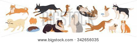 Playful Dogs Flat Vector Illustrations Set. Different Breed Friendly Puppies Isolated On White Backg