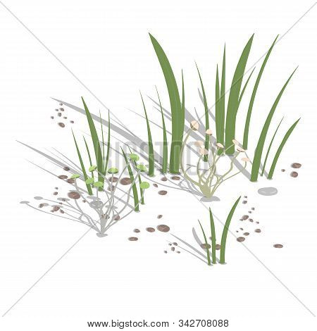 Growing Climbing Mushrooms With Grass And Stones On A White Background. Vector Illustration.
