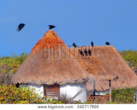 Thatched Huts Sit Amoung Dense Brambles.  Domed Roofline Is Roosting Spot For A Group Of Vultures In