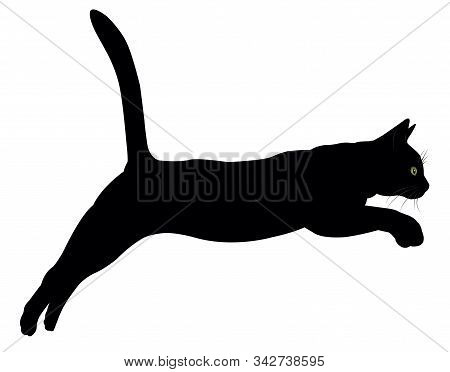 A Leaping Cat, A Silhouette With Eyes And Moustaches.