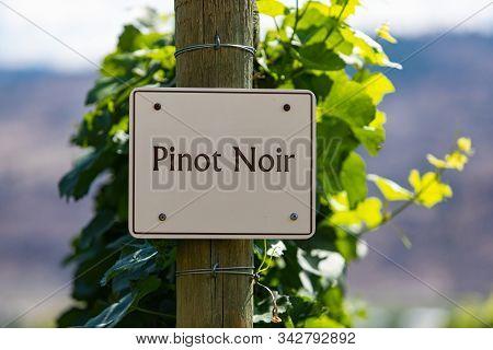 Pinot Gris Wine Grape Variety Sign On Wooden Pole Selective Focus, Vineyard Varieties Signs, Okanaga