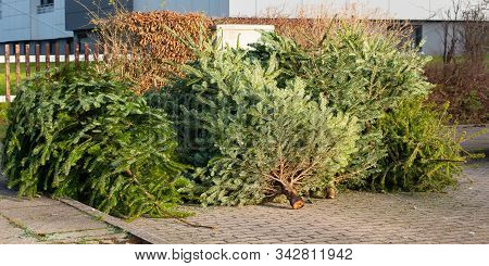 Christmas Tree Disposal After Christmas, Waste Disposal