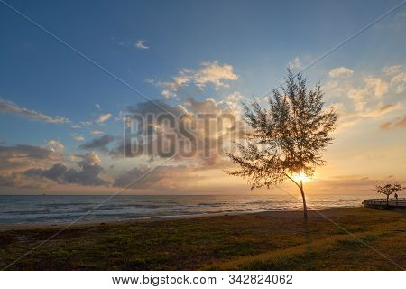 A Seaside View With A Tree And Grass In An Early Morning.