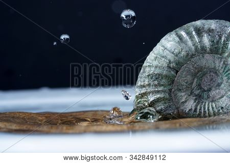 The Ammonites Are An Extinct Subgroup Of Cephalopods.