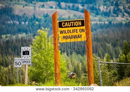 Caution Wildlife On Roadway, Yellow Warning Sign Between Two Wooden Poles, Speed Radar And 50 Km Spe