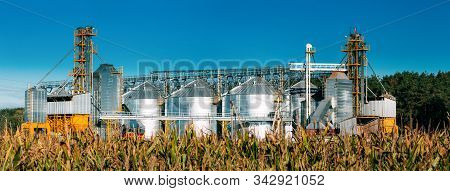 Modern Granary, Grain-drying Complex, Commercial Grain Or Seed Silos In Sunny Summer Rural Landscape