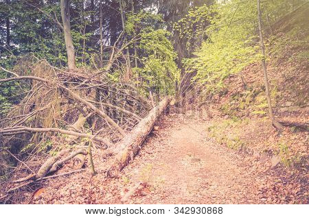 Falling Tree On Path In Slavkov Thick Dense Forest Wood With Beech Trees Near Karlovy Vary (carlsbad