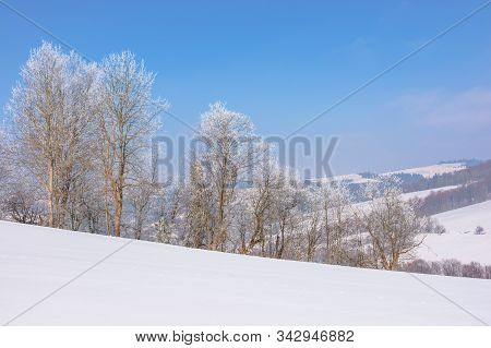 Trees In Hoarfrost On Snow Covered Meadow. Sunny Forenoon Of Mountainous Landscape. Hazy Atmosphere