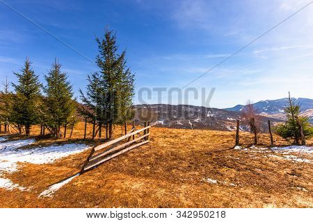Spruce Trees On The Mountain Hill. Early Springtime Sunny Weather With Clouds On The Sky. Snow And G