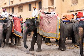Jaipur, India - December 12, 2019: Decorated Elephants Waiting For Tourists At Amber Fort.