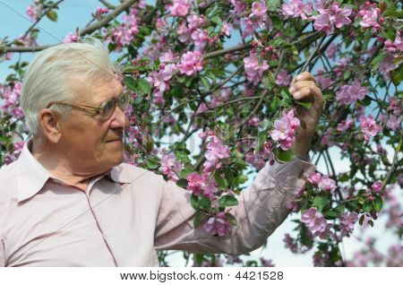 Old Man Hold Twig