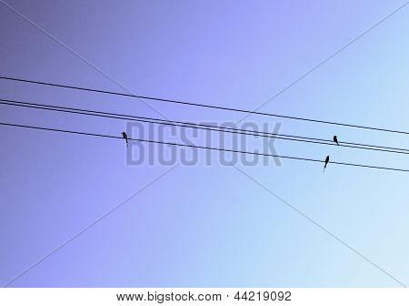 Birds sitting on line