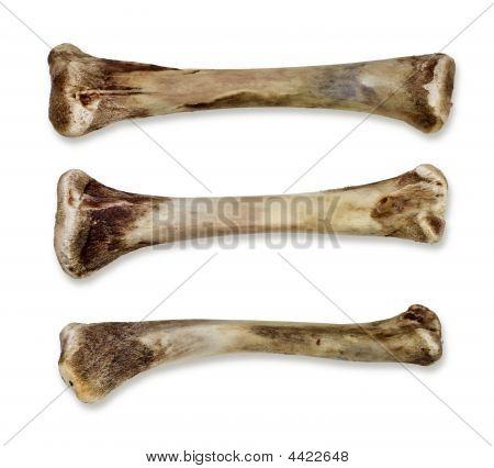 Bones - Isolated