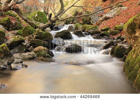 The Forest Faedo. Arroyo del Villar. Cinera of Gordon, Leon.