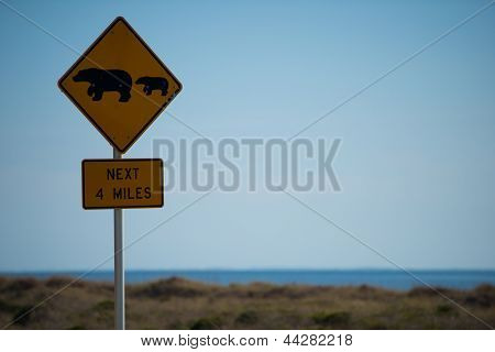 sign of the bears