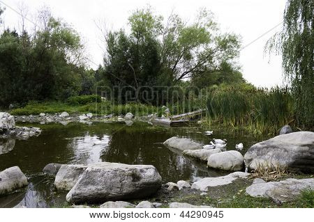 A tranquil pond on the farm with wildlife poster