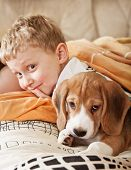Beagle puppy lying in bed with happy little boy poster