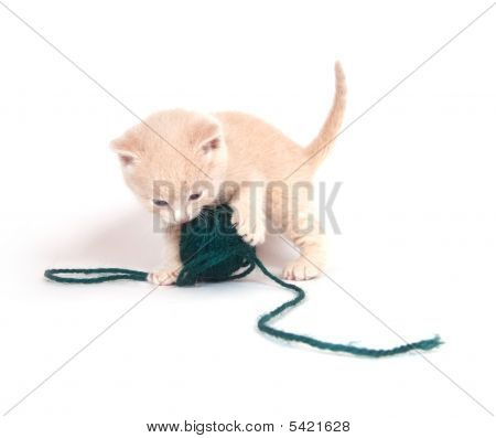 A kitten plays with ball of green yarn on white background poster