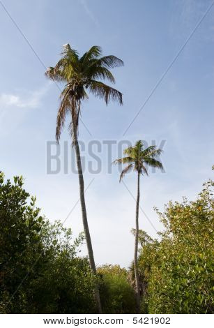 Palms And Blue Skies