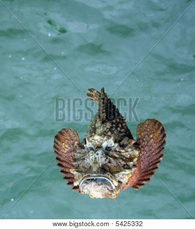 Various Sea Fish