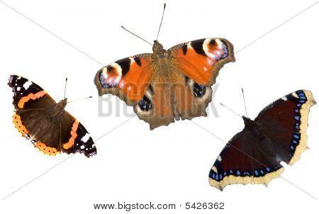 Three Dark Butterflies