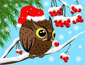 Winter image with red berries and owl poster
