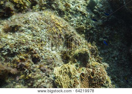 Sponge Life