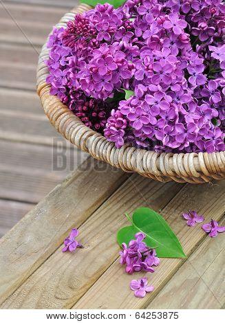 Lilac Flowers In A Wicker Basket