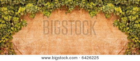 Vintage Ivy Wall