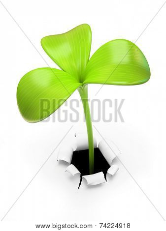 Young green three leaf sprout 3D