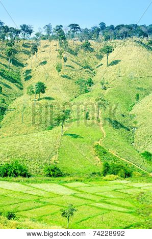 Step Cornfield And Rice Field Landscape