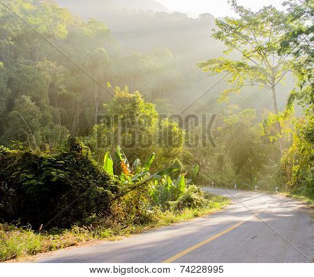 Forest And Road With Sunbeam