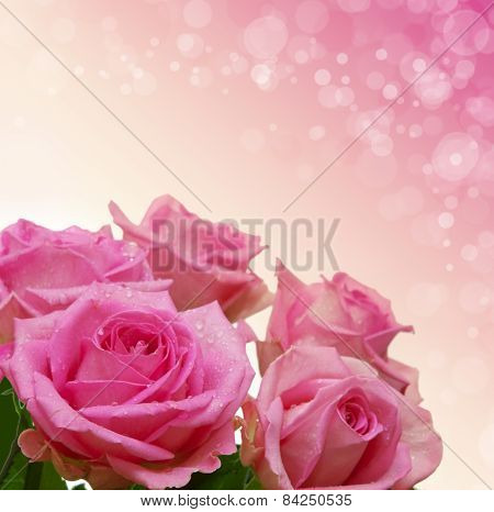Pink Roses Bouquet Isolated.