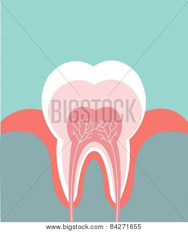 Illustration of tooth detailed anatomy
