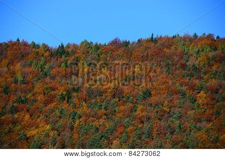 autumn forest with colorful trees and sky