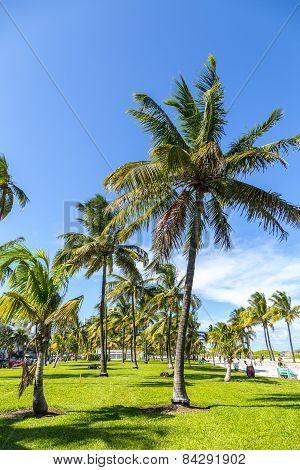 People Relaxing At Beautiful Miami Beach