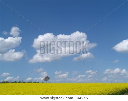 Ripe Landscape With Tree
