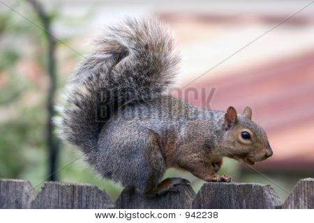 Squirrel Visit