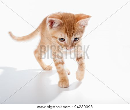 Tabby kitten exploring his surroundings