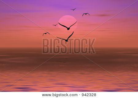 Albatross On A Sunset
