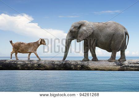 Elephant And Sheep Walking Over The Single Wooden Bridge