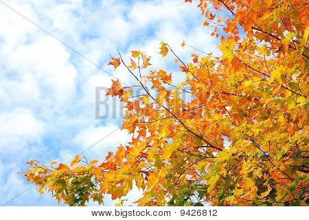 Brilliant Fall Sky