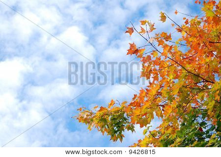 Autumn Leaves against cloud spotted sky
