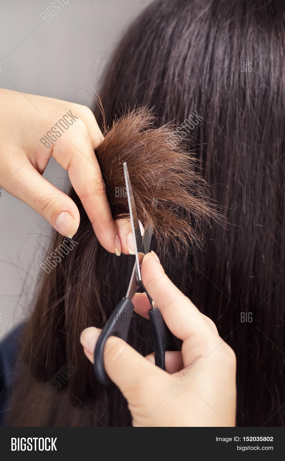 Hairdresser Trimming Image Photo Free Trial Bigstock