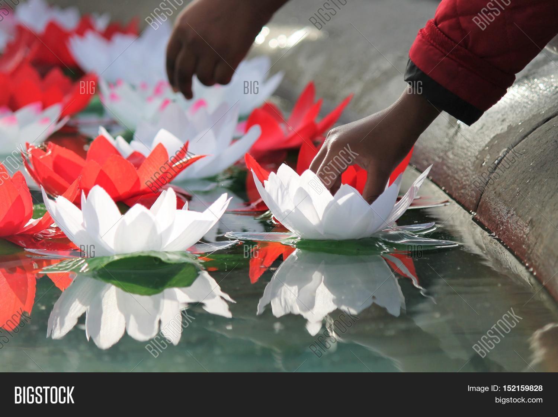 Festival Diwali Lotus Image Photo Free Trial Bigstock