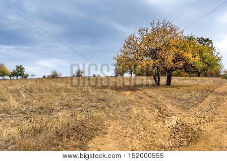 Amazing Autumn Landscape with yellow tree of Cherna Gora mountain, Pernik Region, Bulgaria