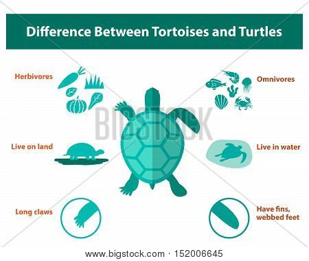 Difference between tortoises and turtles vector design