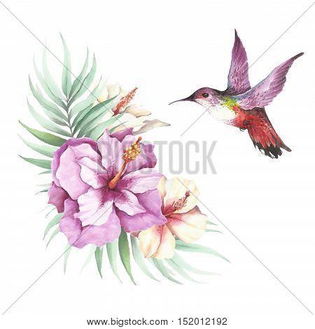 The image of tropical flowersleaves and hummingbirds . Watercolor illustration.